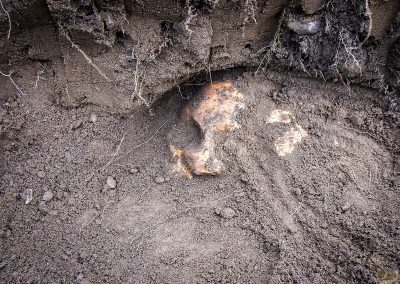 First skull discovered